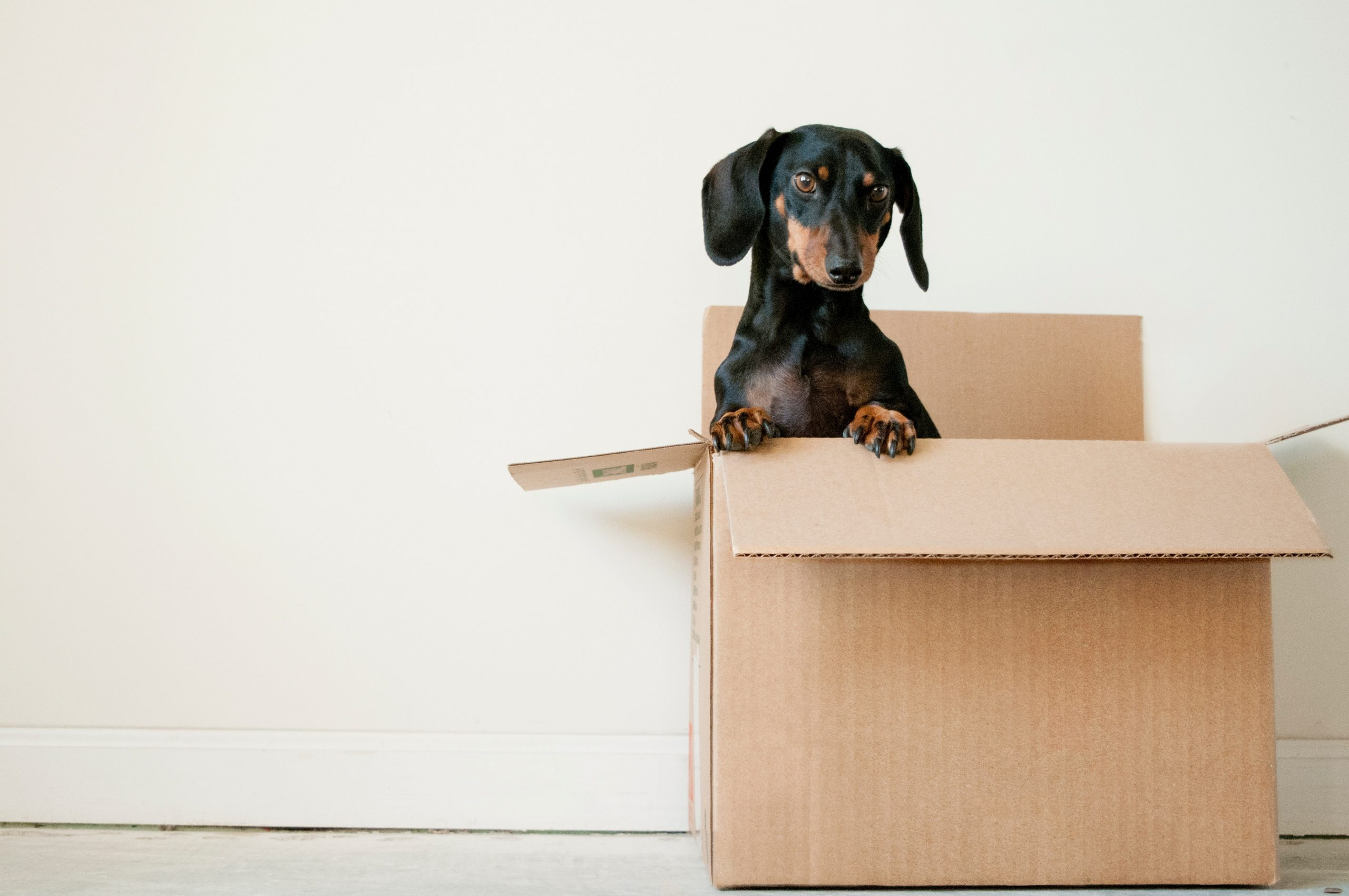 Removalist Canberra Removals